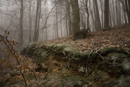 Forest, Hauptstuhl, Germany